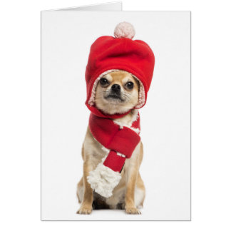 Chihuahua Wearing Christmas Hat And Scarf Greeting Card