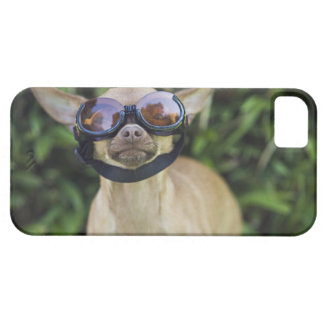 Chihuahua wearing goggles case for the iPhone 5