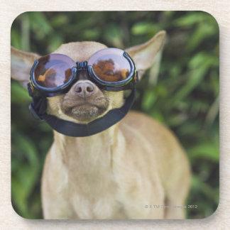 Chihuahua wearing goggles coaster