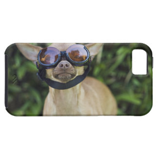 Chihuahua wearing goggles iPhone 5 case