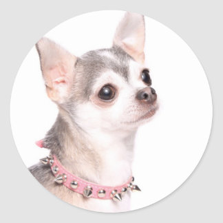 chihuahua with pink studded collar sticker
