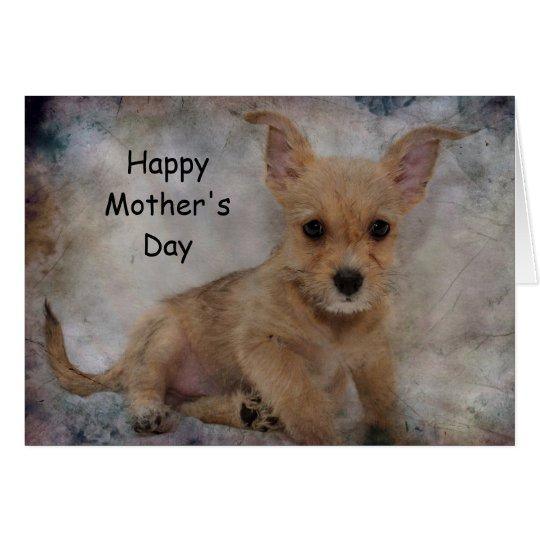 Chihuahua/Yorkie Puppy Card