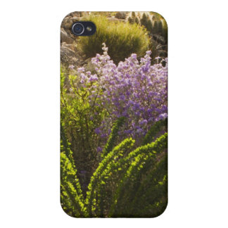 Chihuahuan desert plants in bloom iPhone 4 case