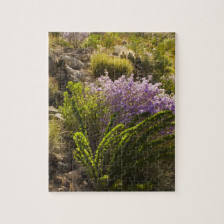 Chihuahuan desert plants in bloom jigsaw puzzles