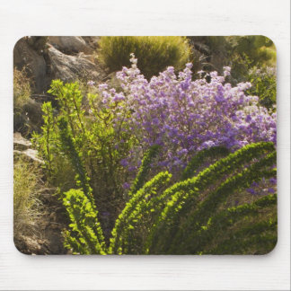 Chihuahuan desert plants in bloom mouse mat