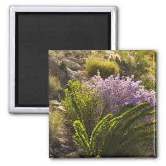 Chihuahuan desert plants in bloom square magnet