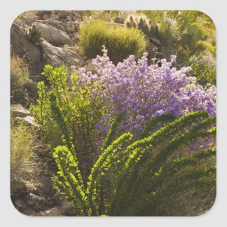 Chihuahuan desert plants in bloom square sticker