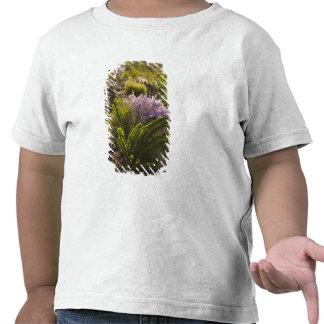 Chihuahuan desert plants in bloom tee shirt