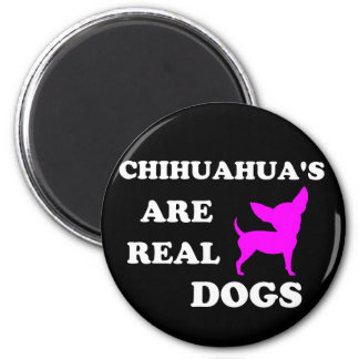 Chihuahua's are real dogs magnet
