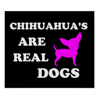 Chihuahua's are real dogs poster