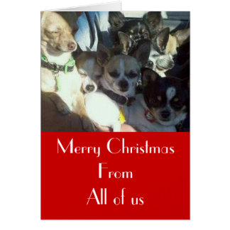 Chihuahuas Christmas Card