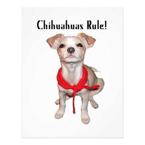 Chihuahuas Rule Flyer