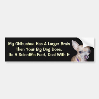Chihuhahua Looking At You Bumper Sticker