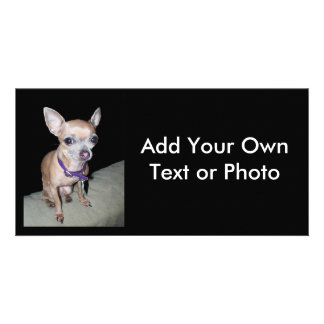 Chihuhahua Looking At You Photo Greeting Card