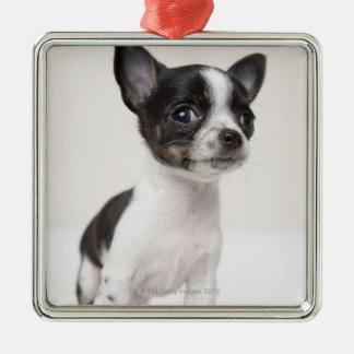 Chihuhua puppy standing on white fabric christmas ornament
