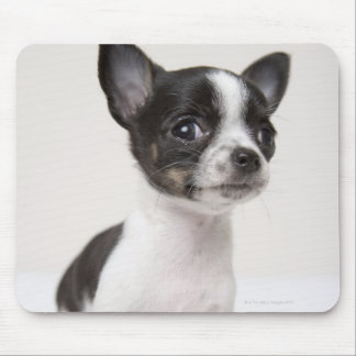 Chihuhua puppy standing on white fabric mouse mat