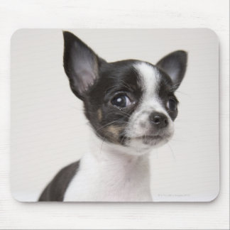 Chihuhua puppy standing on white fabric mouse pad