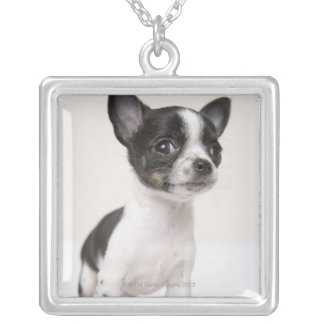Chihuhua puppy standing on white fabric necklaces