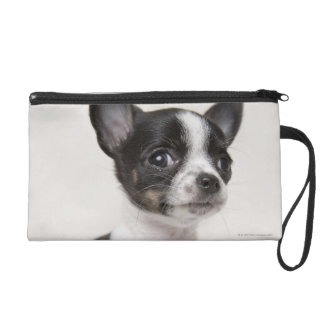 Chihuhua puppy standing on white fabric wristlet clutch