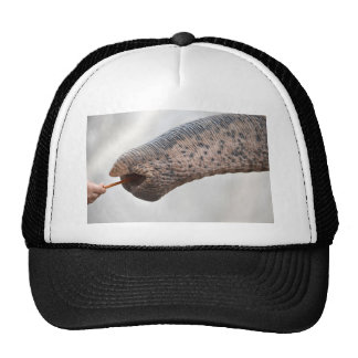 child and elephant trucker hat