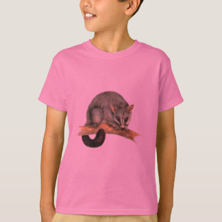 Childrens t-shirt - cooroy possum