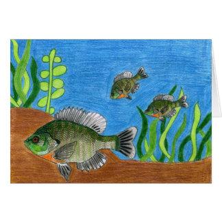 Children's Winning Artwork: bluegill Cards