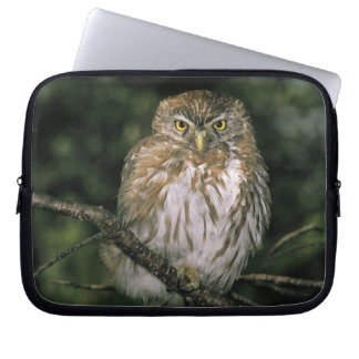 Chile, Aysen. Autral Pygmy Owl (Glaucidium Laptop Sleeve