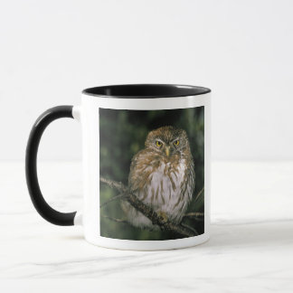 Chile, Aysen. Autral Pygmy Owl (Glaucidium Mug