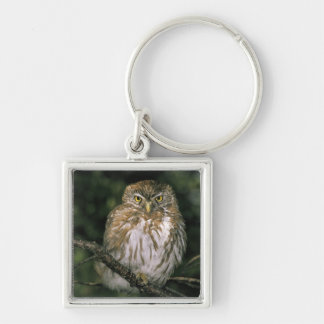 Chile, Aysen. Autral Pygmy Owl (Glaucidium Silver-Colored Square Key Ring
