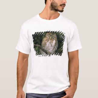 Chile, Aysen. Autral Pygmy Owl (Glaucidium T-Shirt