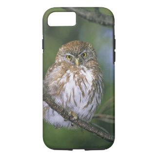 Chile, Aysen. Juvenile Autral Pygmy Owl iPhone 8/7 Case