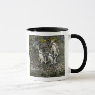 Chile, Chiloe Island, Humboldt Penguins, Mug