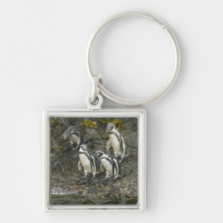 Chile, Chiloe Island, Humboldt Penguins, Silver-Colored Square Key Ring