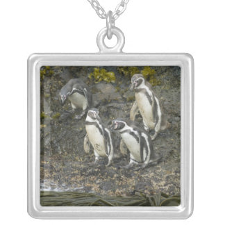 Chile, Chiloe Island, Humboldt Penguins, Silver Plated Necklace