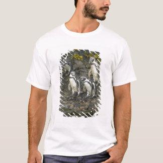 Chile, Chiloe Island, Humboldt Penguins, T-Shirt
