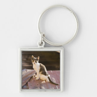 Chile, Valparaiso. Cat on a roof Silver-Colored Square Key Ring