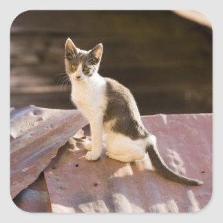Chile, Valparaiso. Cat on a roof Square Sticker