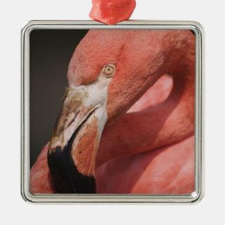 Chilean Flamingo, Phoenicopterus chilensis Christmas Ornament