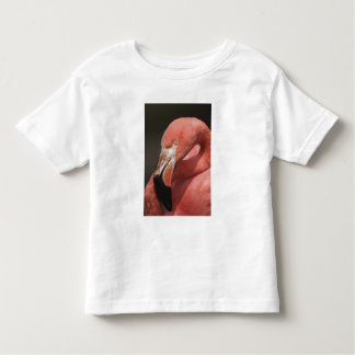 Chilean Flamingo, Phoenicopterus chilensis Toddler T-Shirt