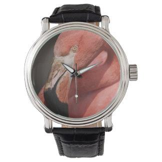 Chilean Flamingo, Phoenicopterus chilensis Watch