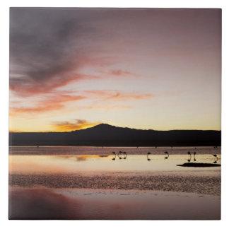 Chilean Flamingo Tile