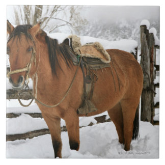 Chilean horse outfitted with traditional Chilean Tile