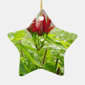 Chili flower ceramic star decoration