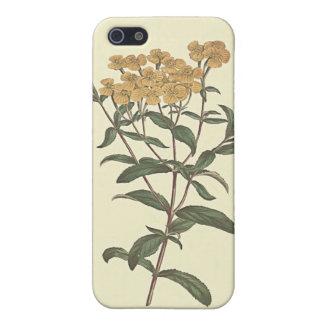 Chili Marigold Botanical Illustration iPhone 5 Covers