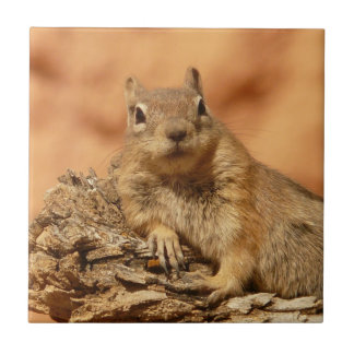 Chilled Out Ground Squirrel Tile