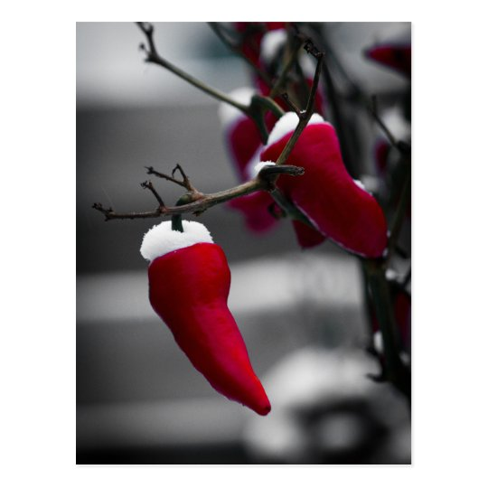 Chilli Christmas Cards