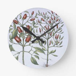 Chilli Pepper plants, from the 'Hortus Eystettensi Wall Clock