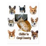 Chillin' in  Corgi Country Post Card