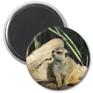 chillin meerkat 6 cm round magnet