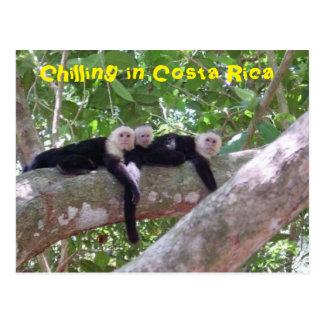Chilling in Costa Rica Postcard